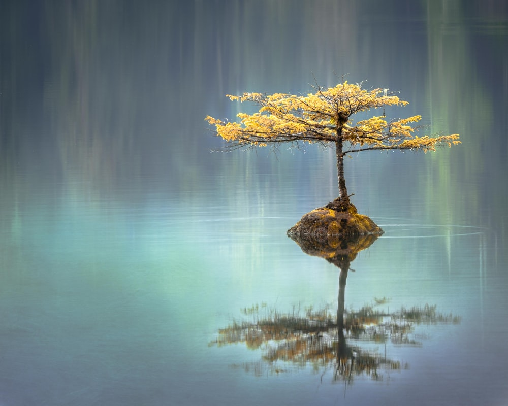 yellow leaf tree between calm body of water at daytime