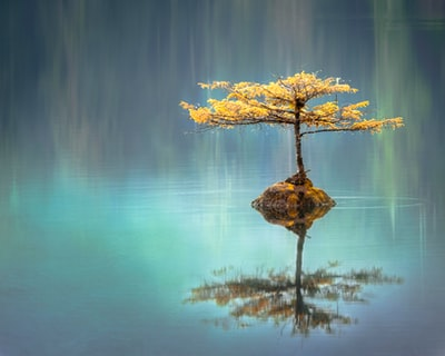 yellow leaf tree between calm body of water at daytime reflection teams background