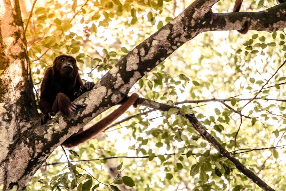 brown monkey climbing on tree