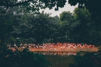 flock of flamingos during daytime