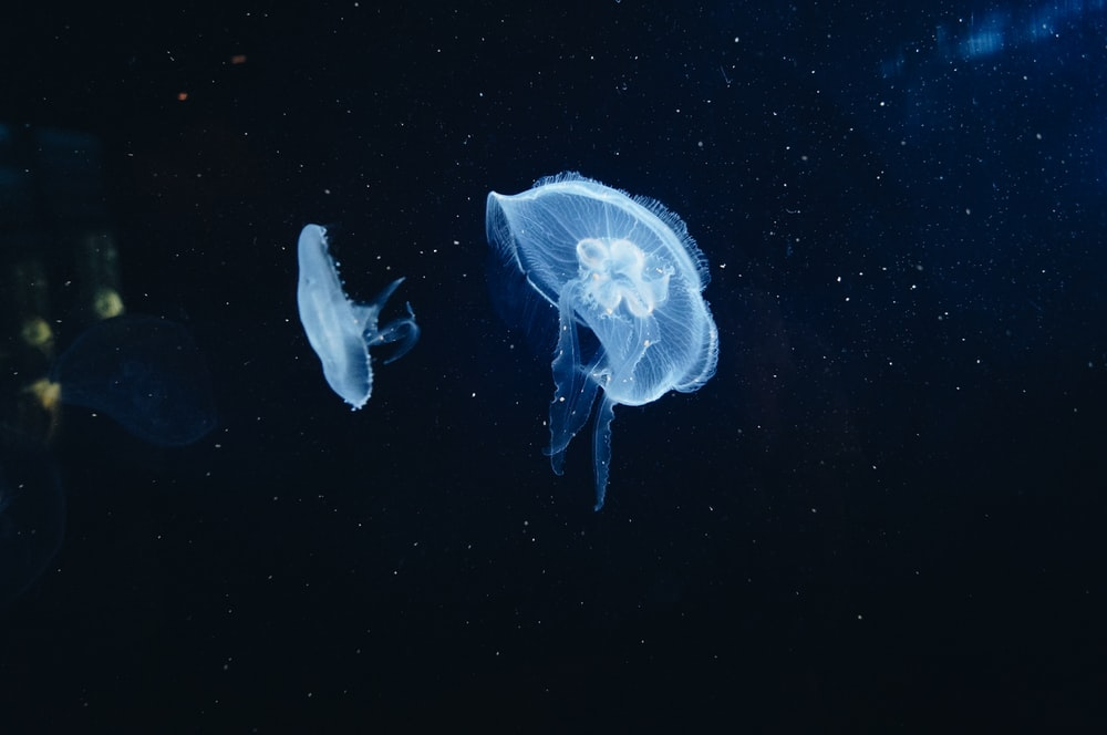 closeup photography of jellyfish