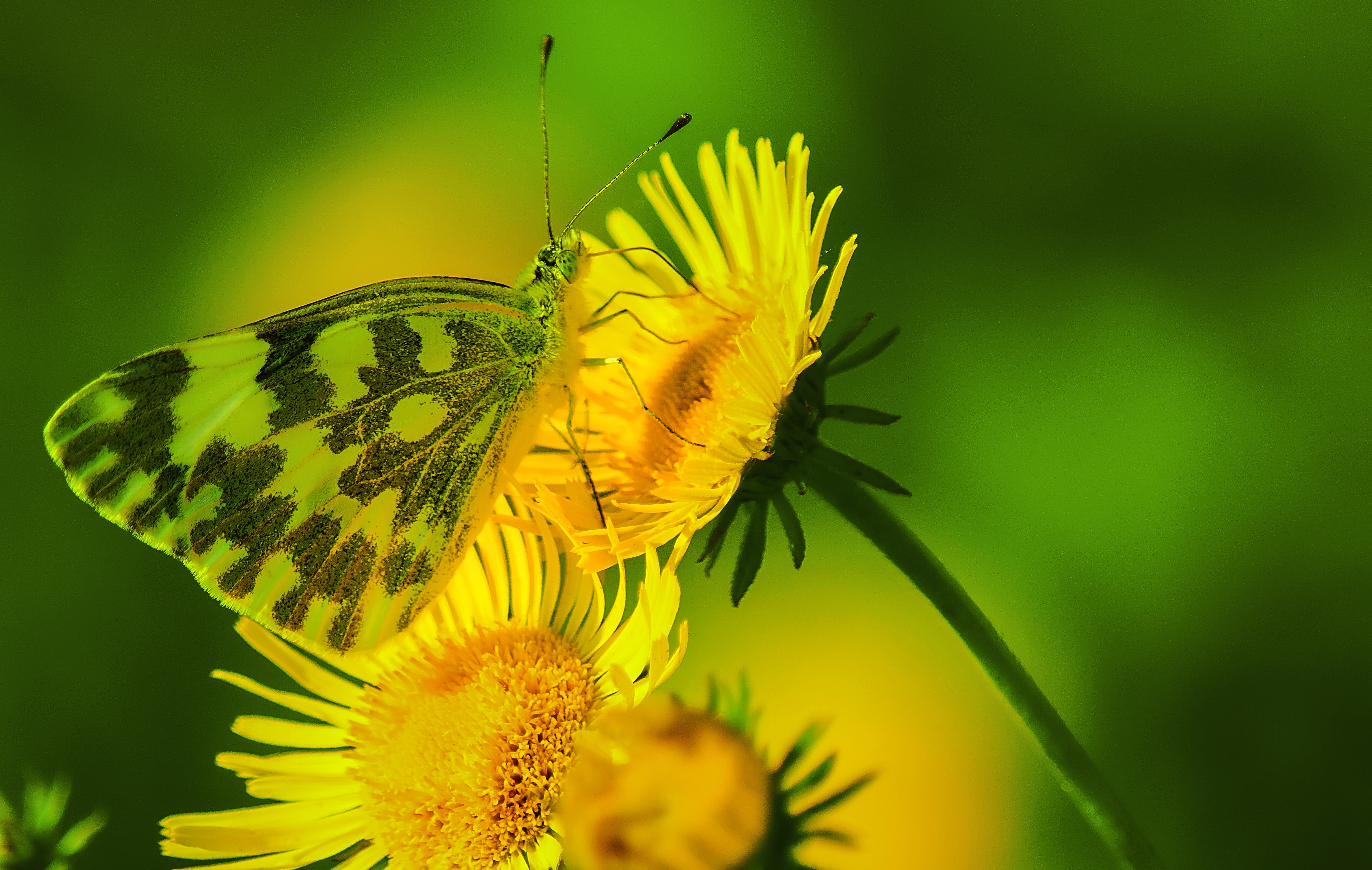 close-up photography of butterfly on yellow petaled flower