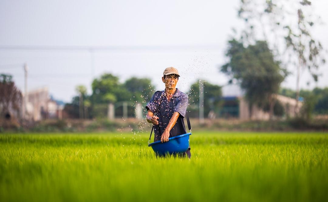 Lúa Việt Nam