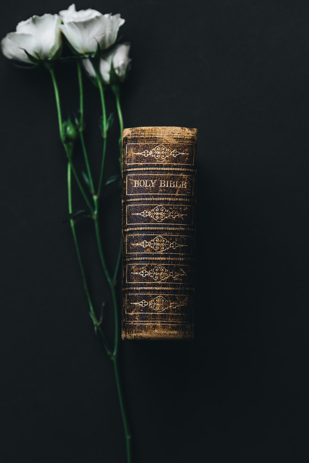 Holy Bible beside white rose