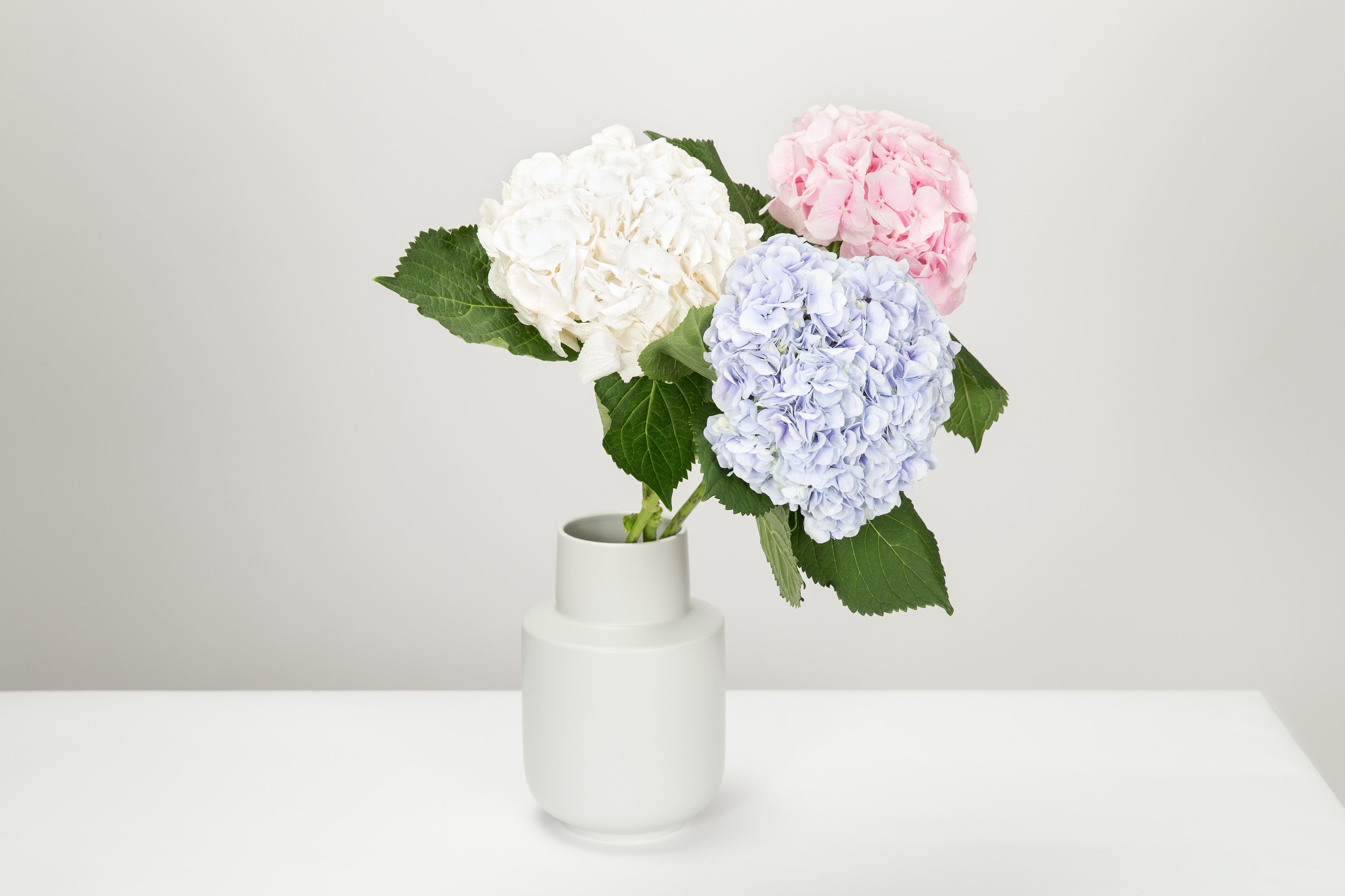 three pink, white, and purple petaled flowers in white vase
