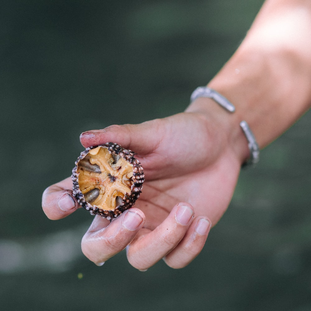 person holding brown and gray fruit