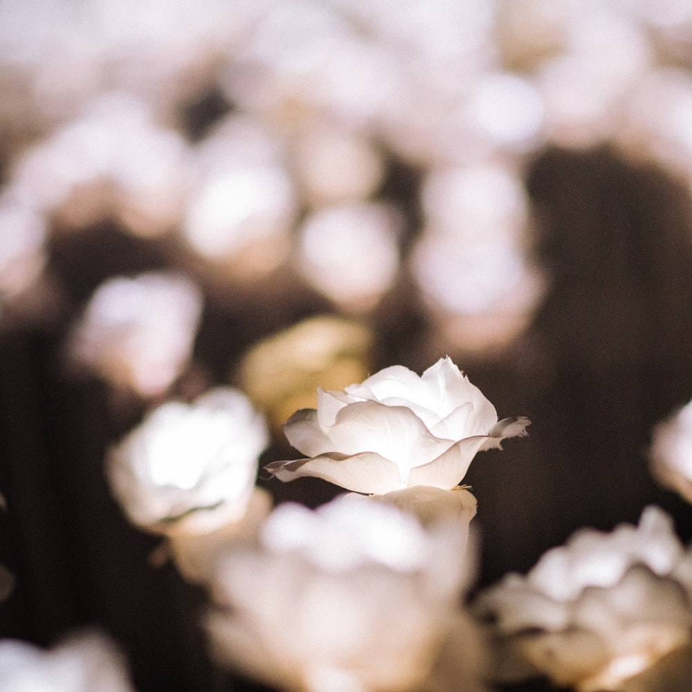 close-up photograqphy of white flower