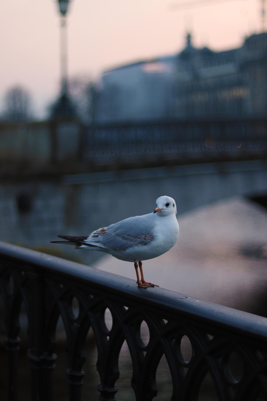white bird during daytime