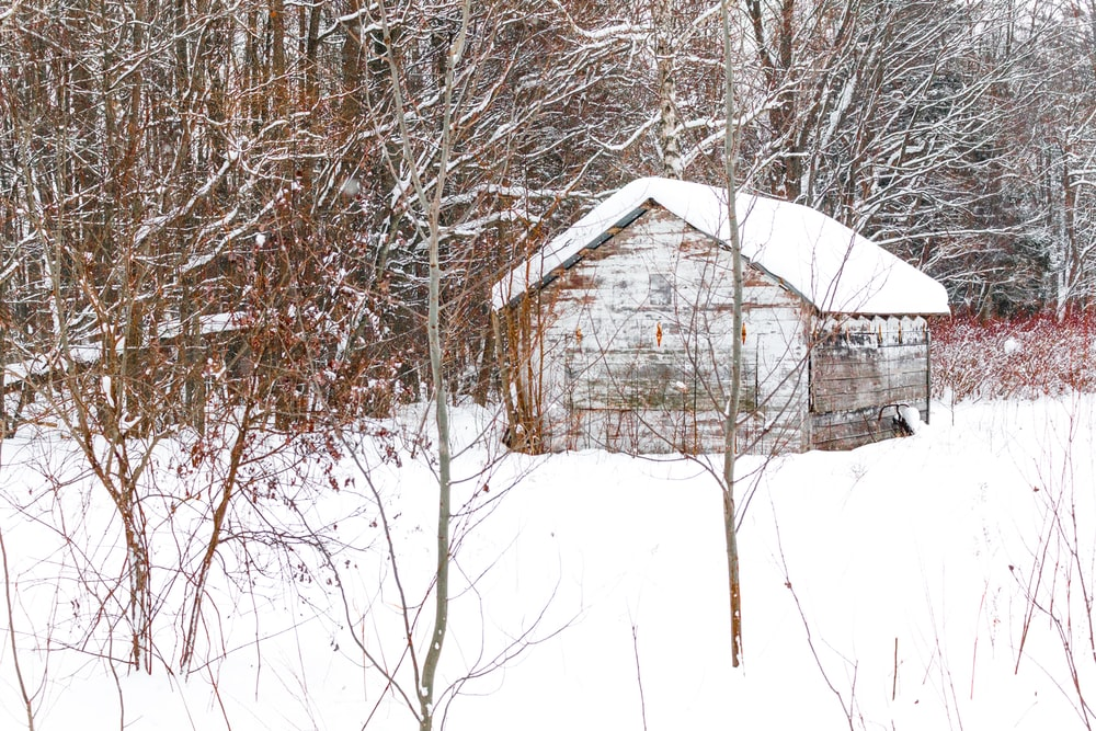 shack covered with snow between leafless trees