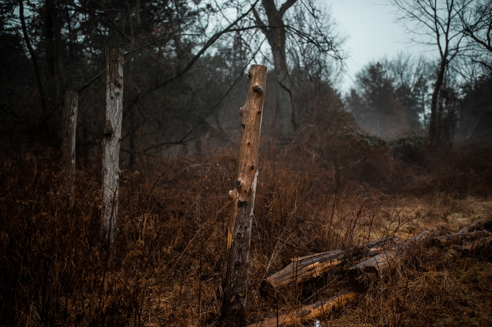 brown wooden log in the forest