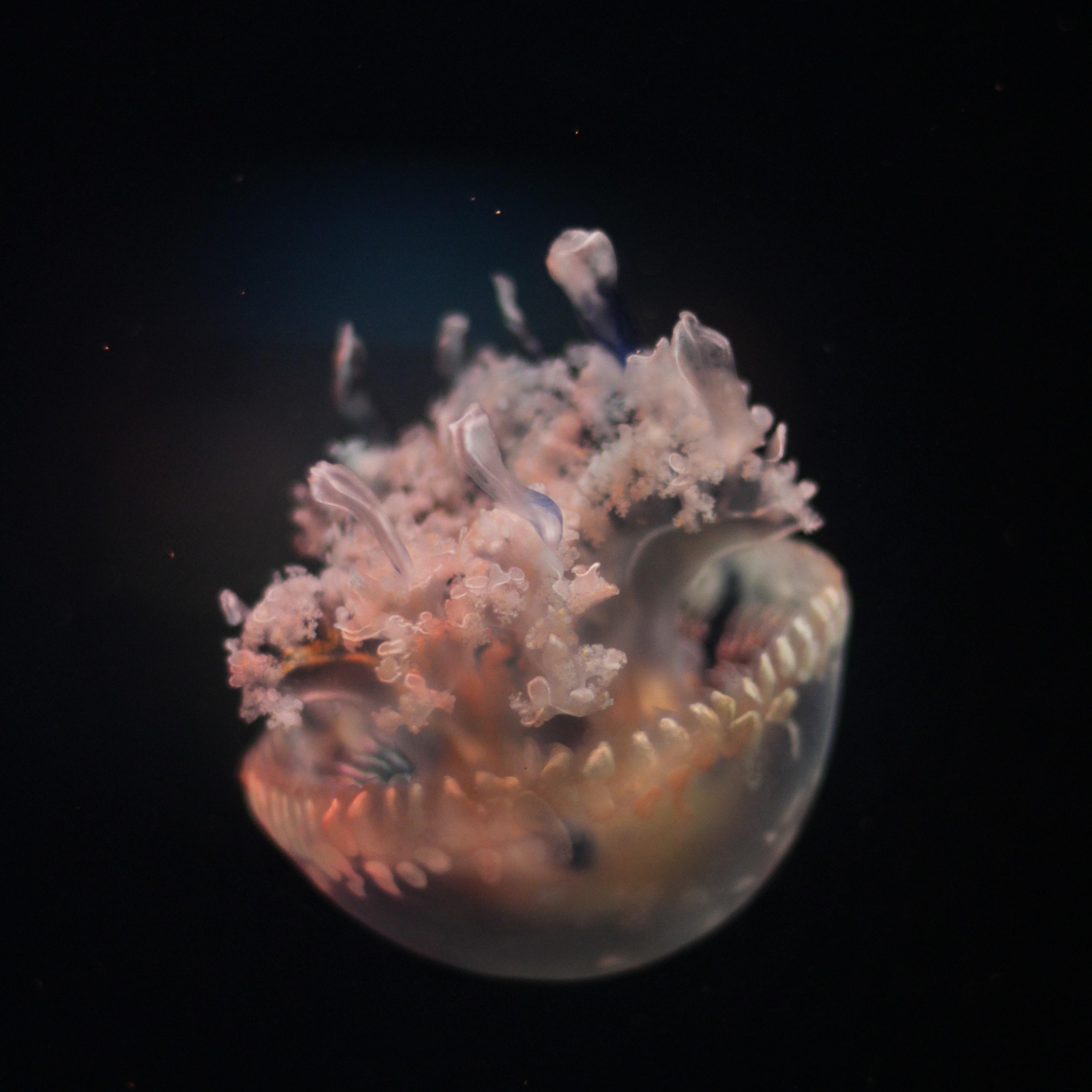 macro shot of jellyfish