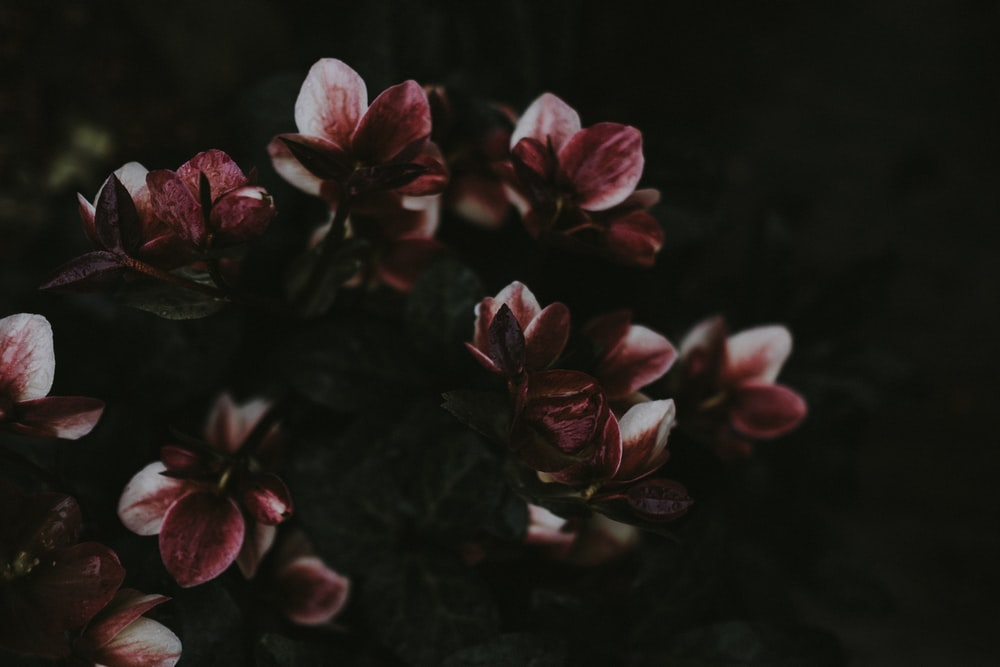 Spring flower pictures download free images on unsplash purple petaled flowers mightylinksfo