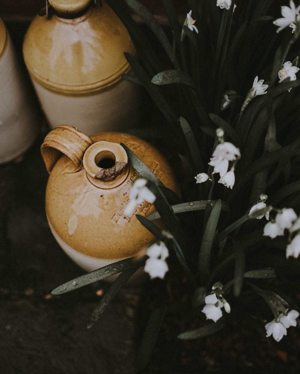 brown ceramic jars beside white flowers