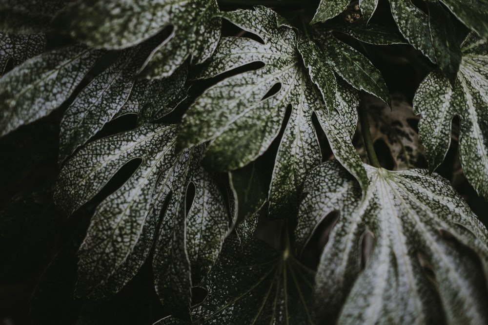 macro shot photography of green and white leaves