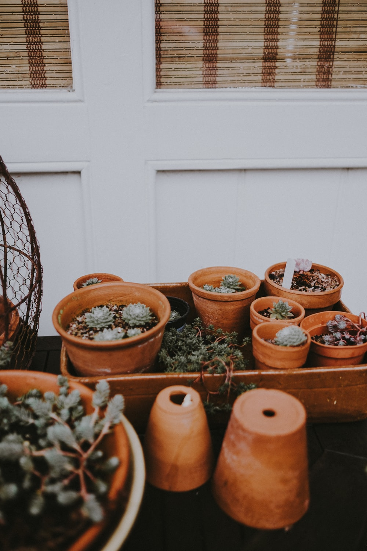 green succulent plants in brown pots