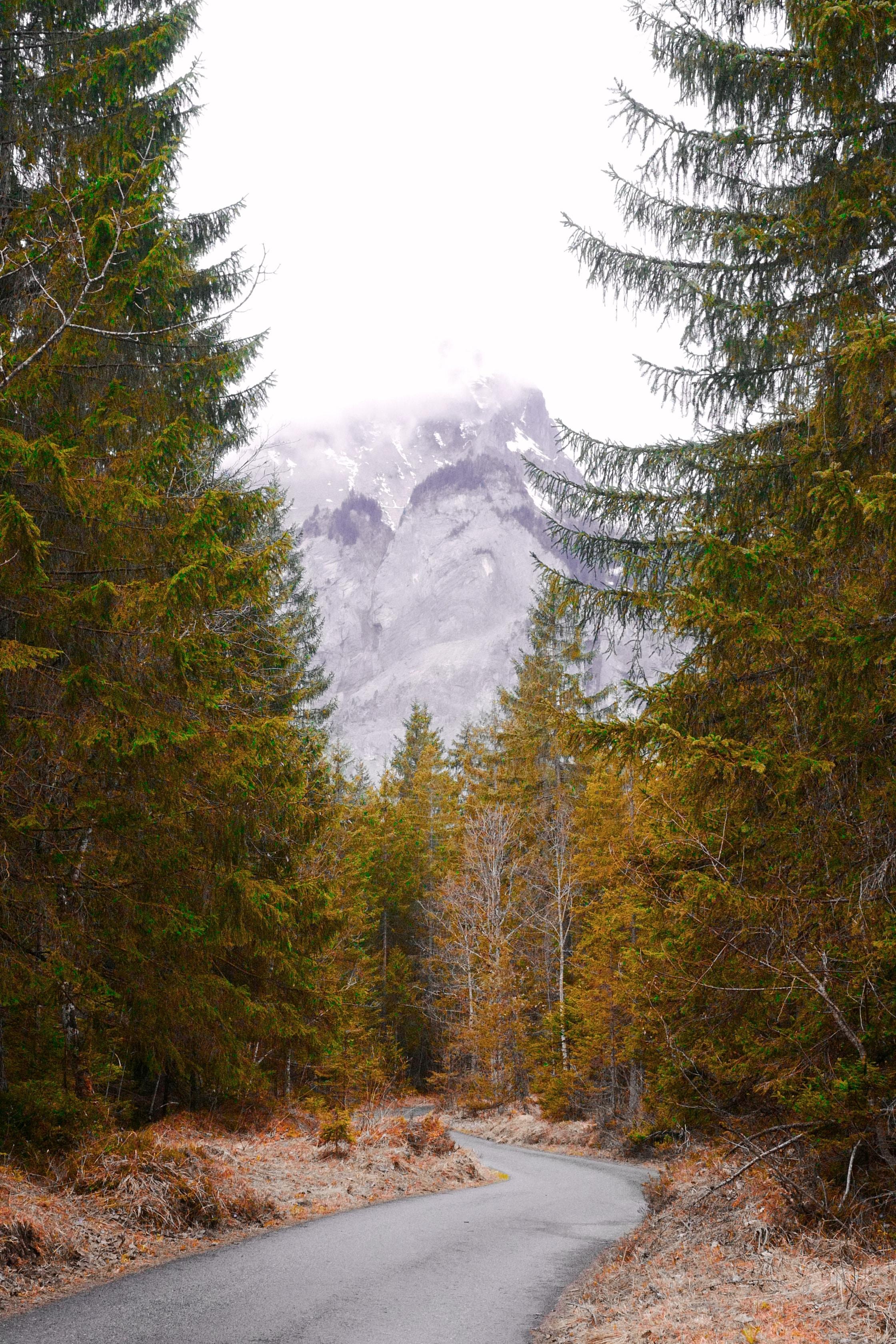 empty road between trees near mountain
