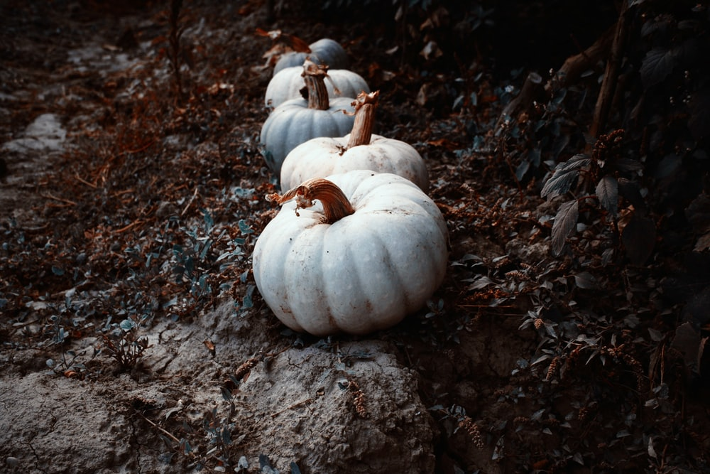 squashes on brown soil