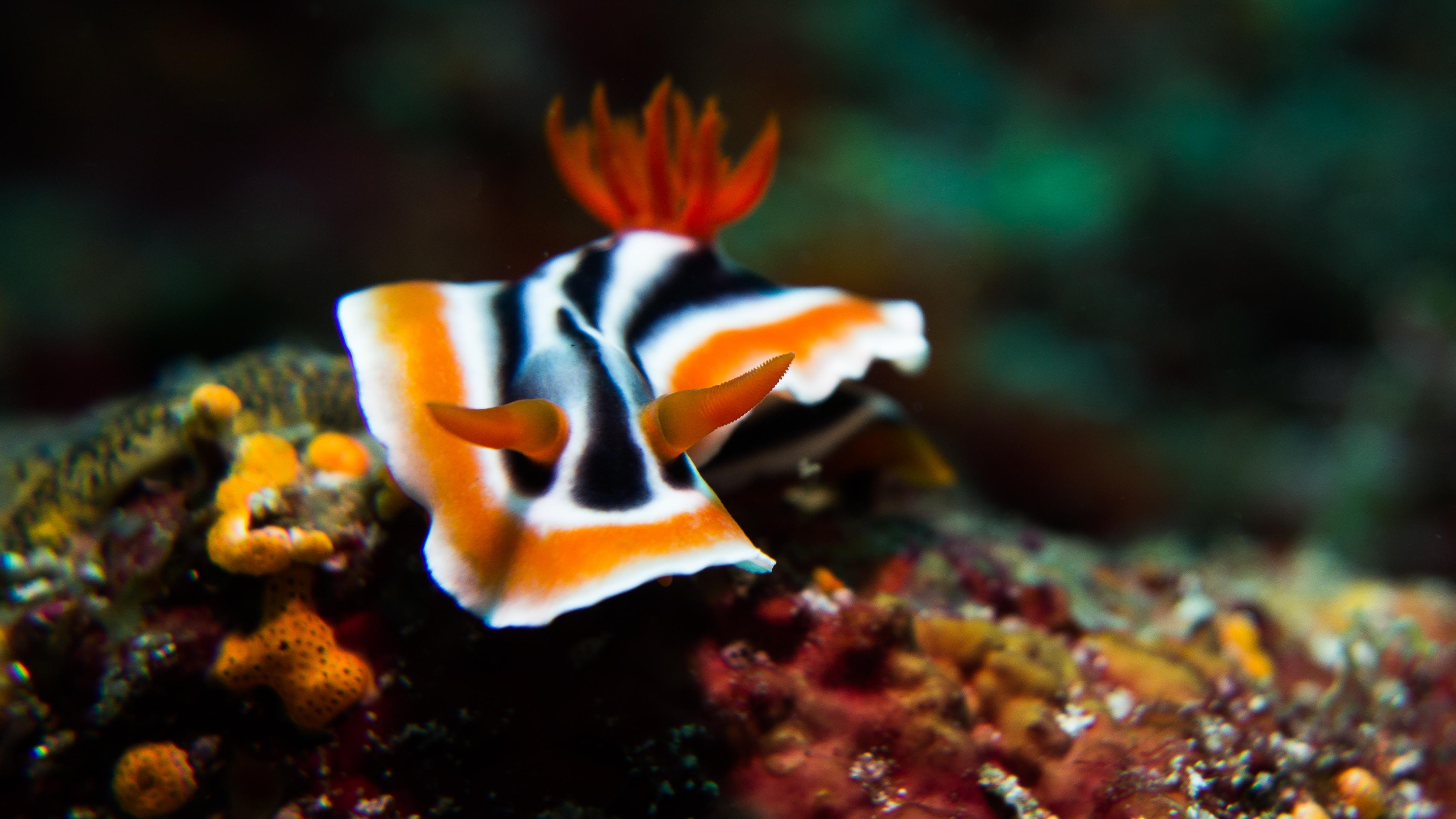 white, black, and orange sea creature photograph