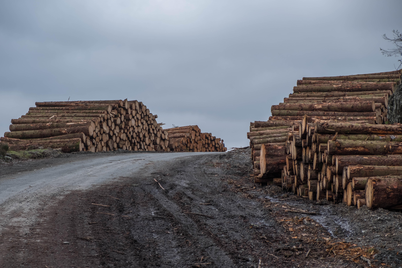 assorted logs beside road
