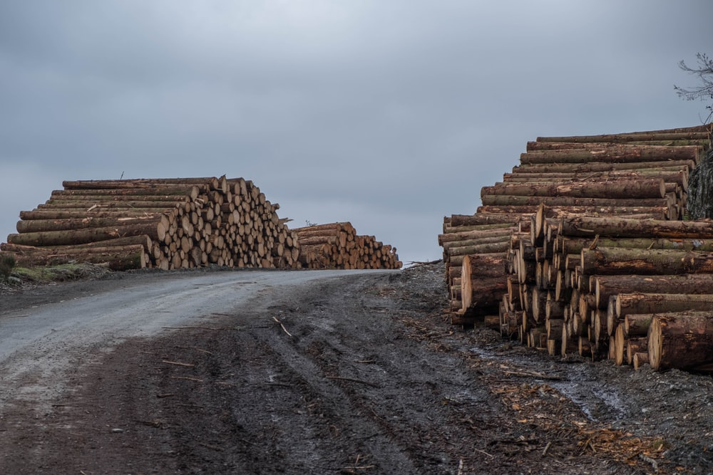 assorted logs beside road