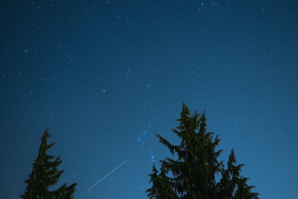 green trees under starry night sky