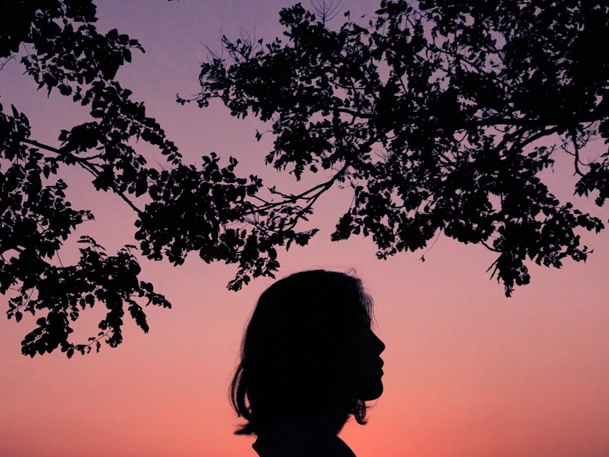 silhouette of person under tree