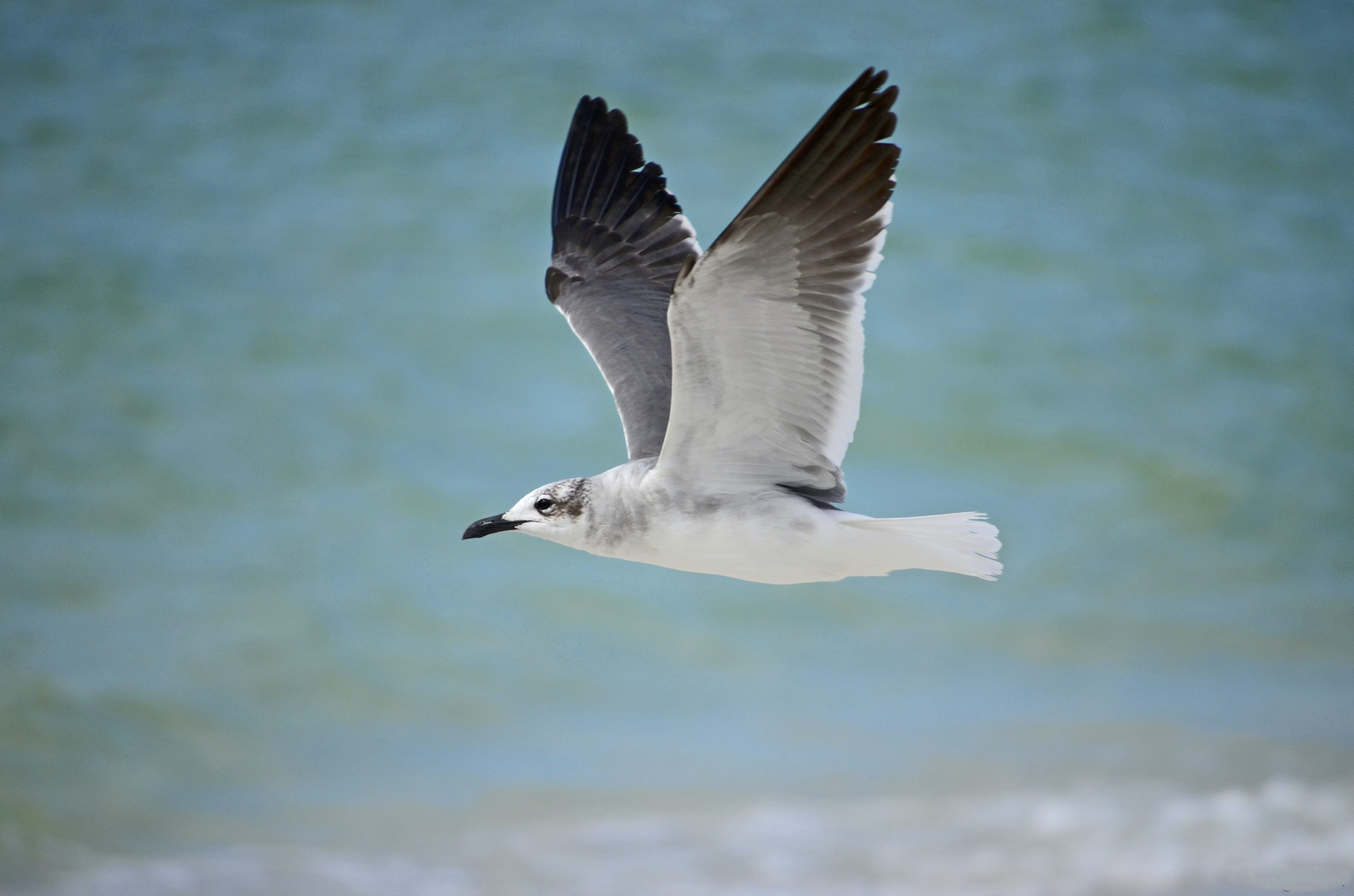 white seagull flying over a body of water
