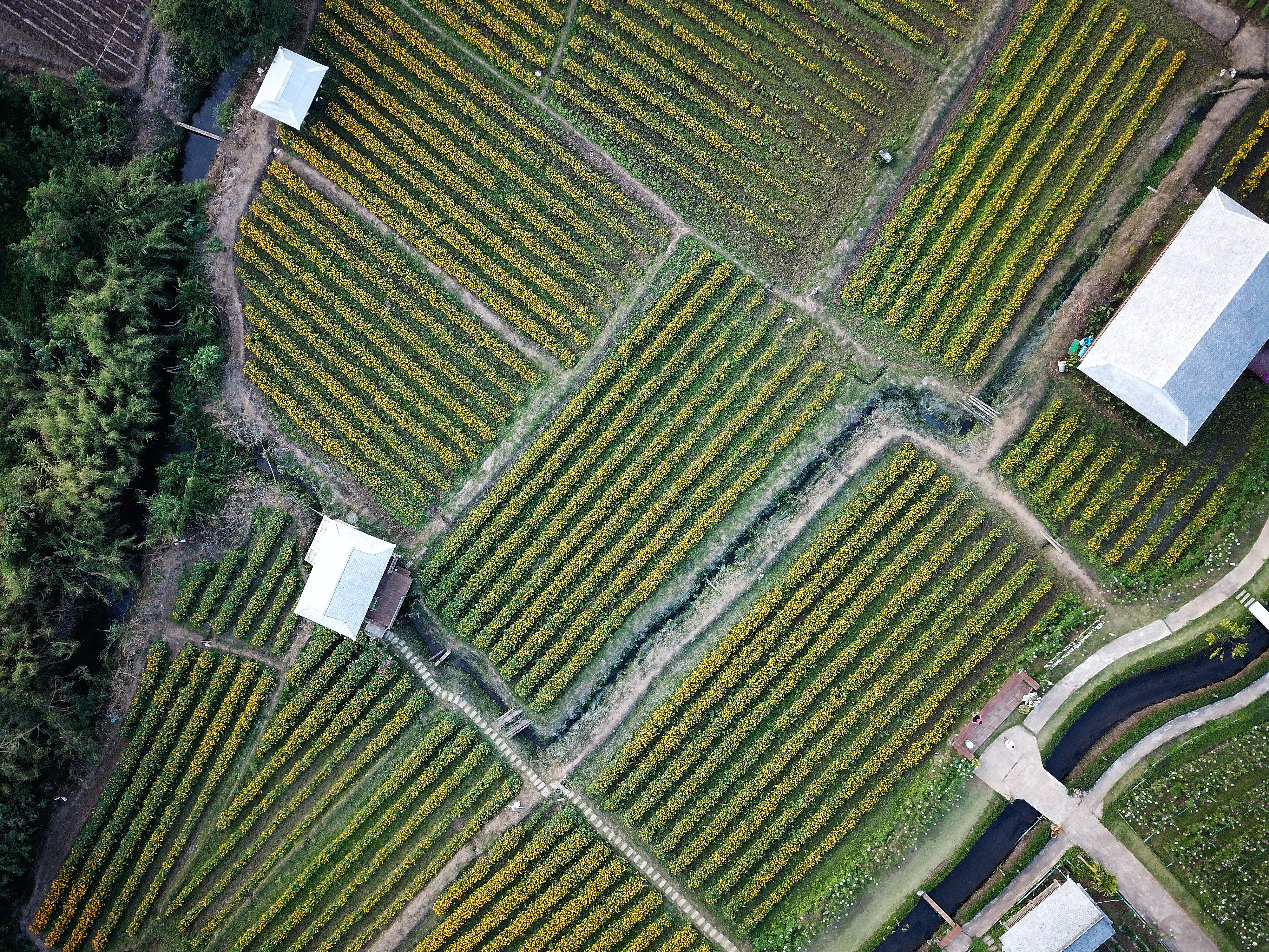 aerial photography of green field and houses at daytime