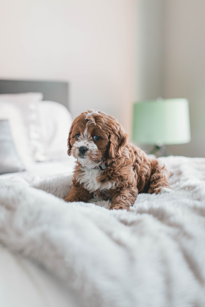 15 Great Dog Breeds If You Live in an Apartment