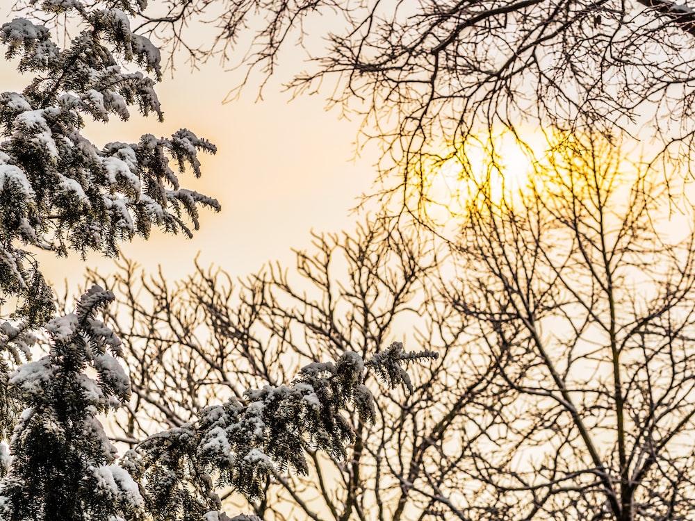 bare trees under white sky