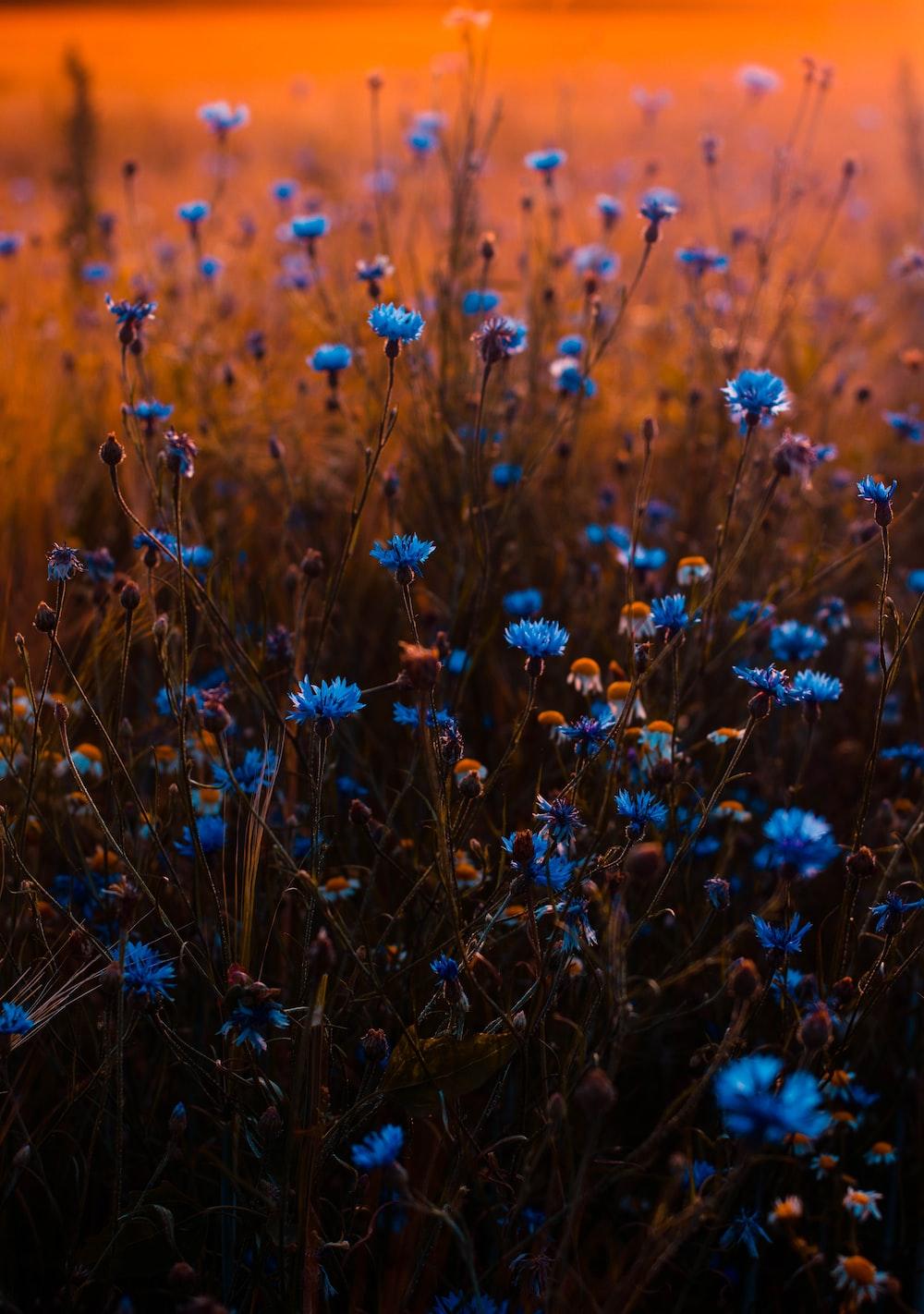 closeup photo of blue petaled flowers