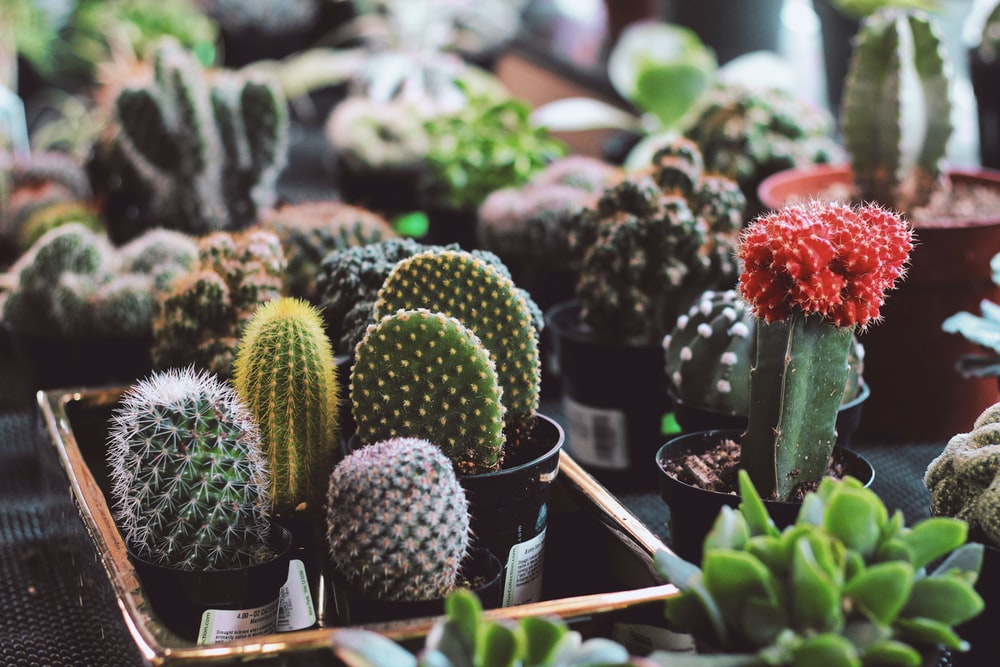 assorted potted succulent plants