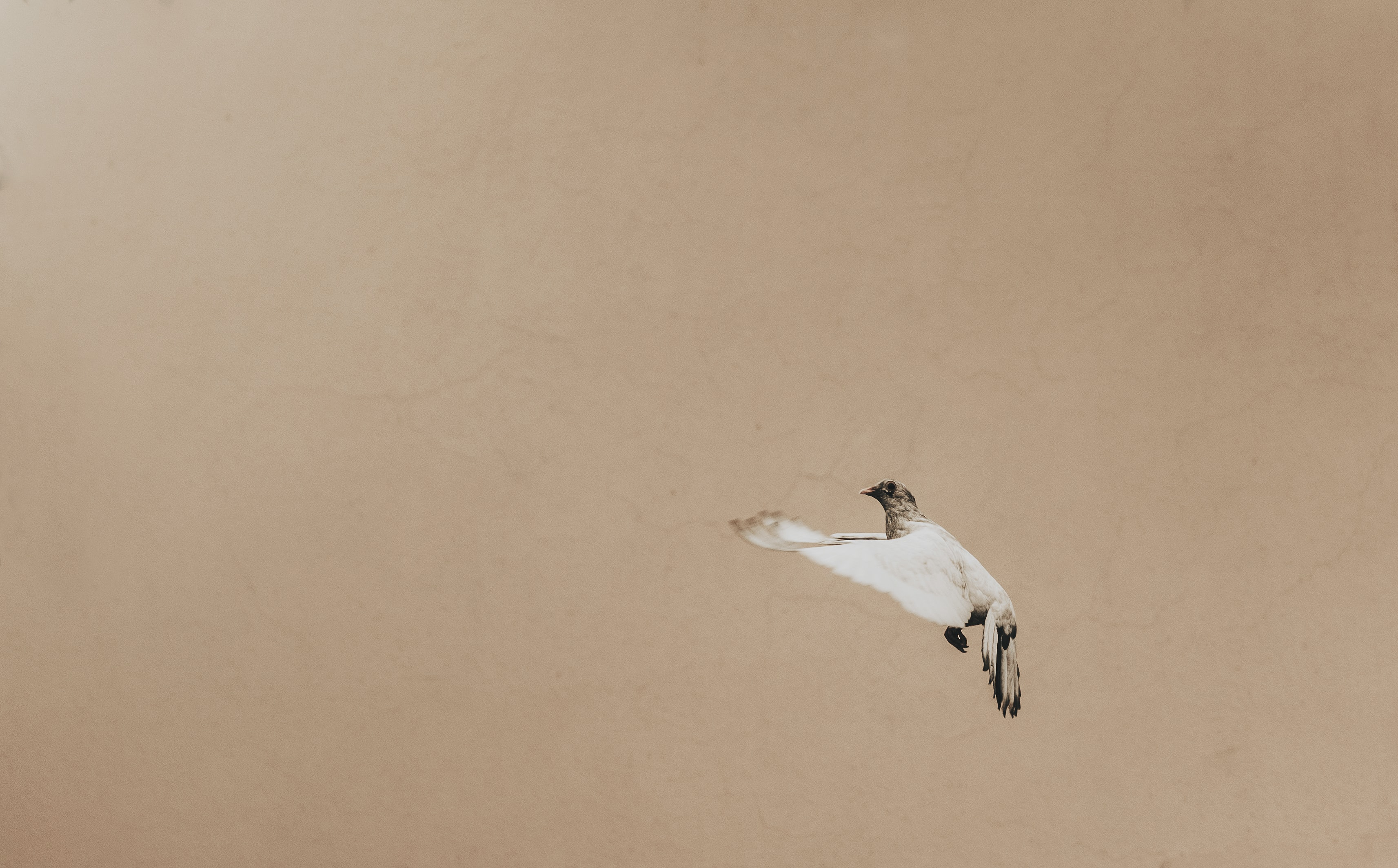 white and brown bird flying on air