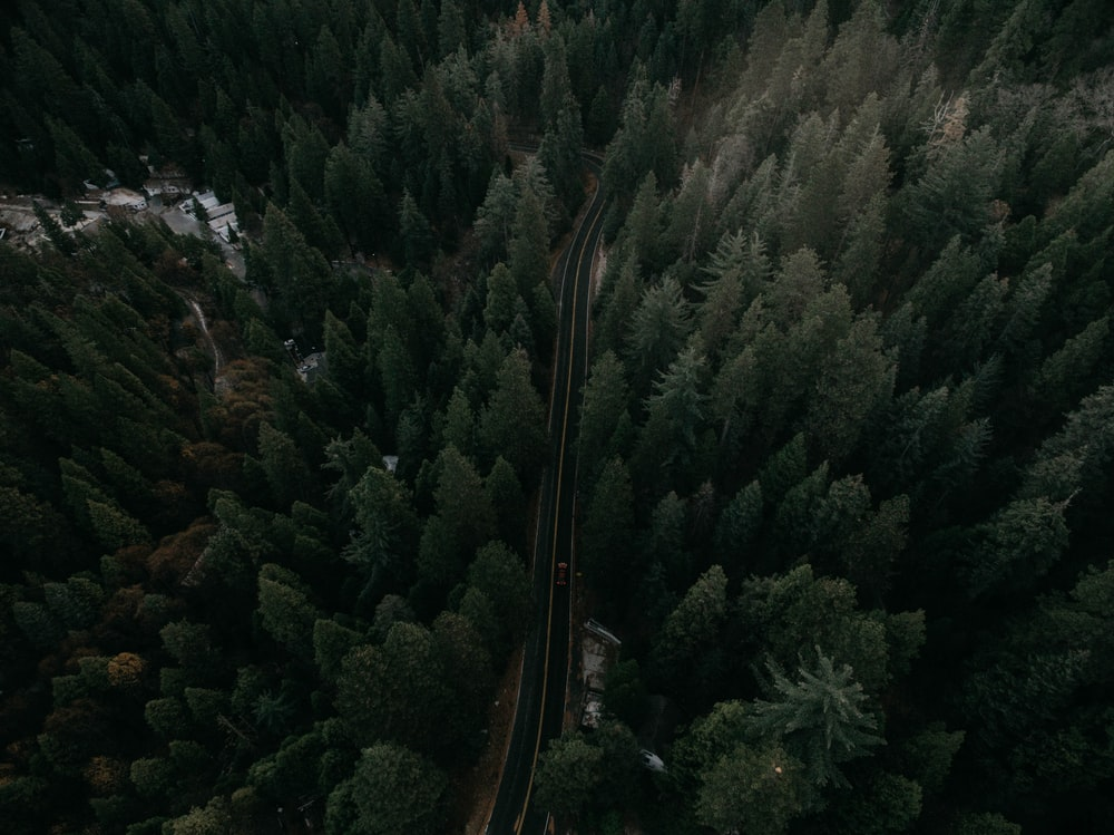 aerial photography of road on forest