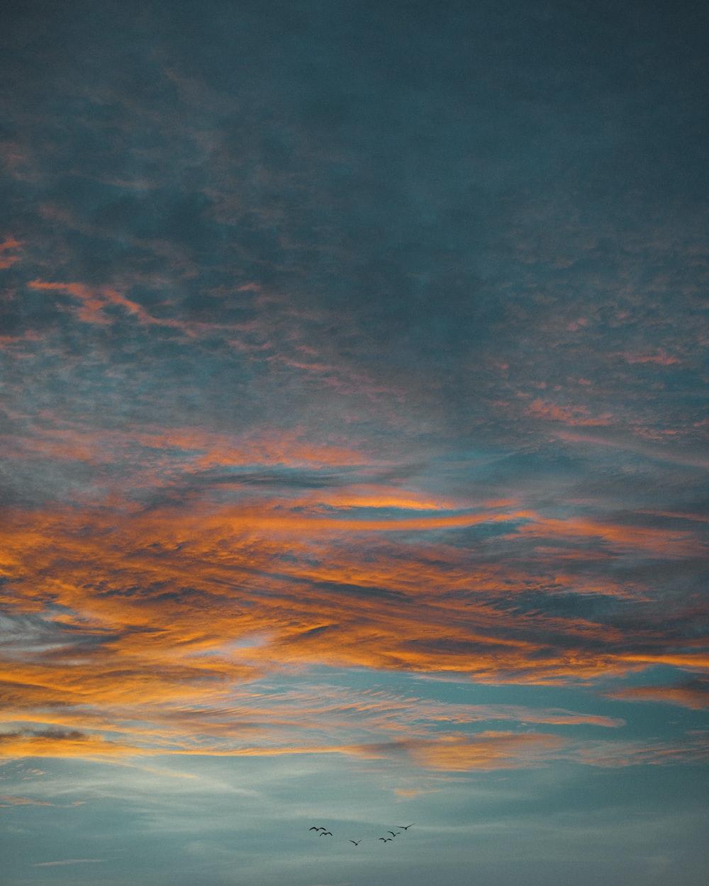 flock of birds in flight under clouds during golden hour