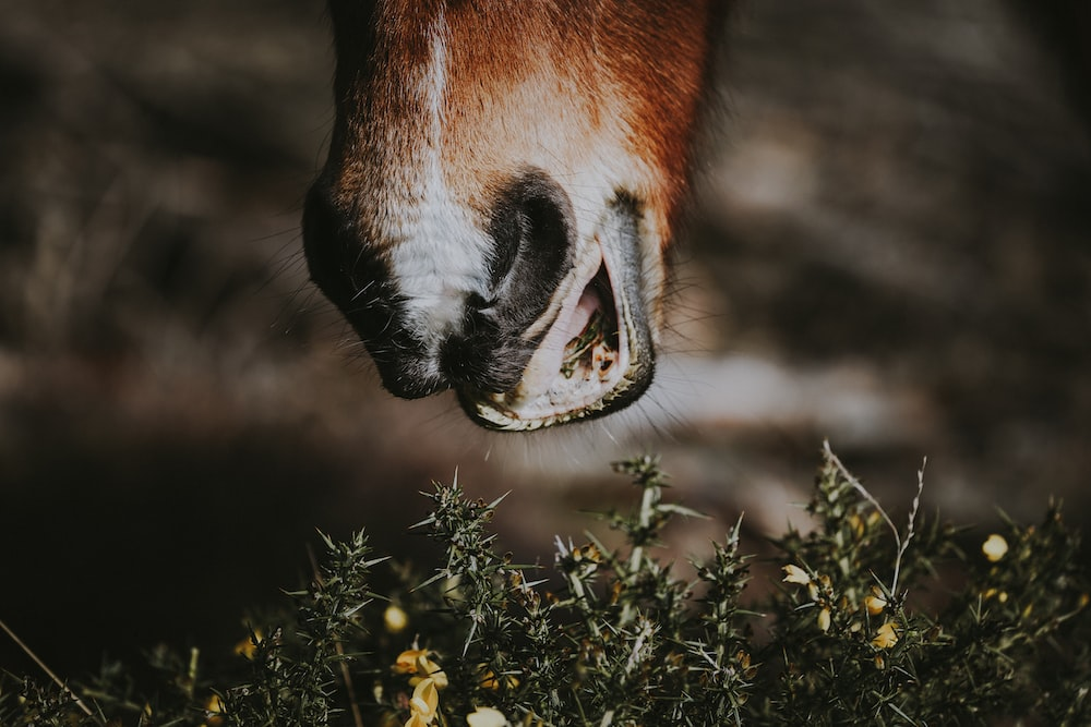brown animal about to eat grass in closeup photography