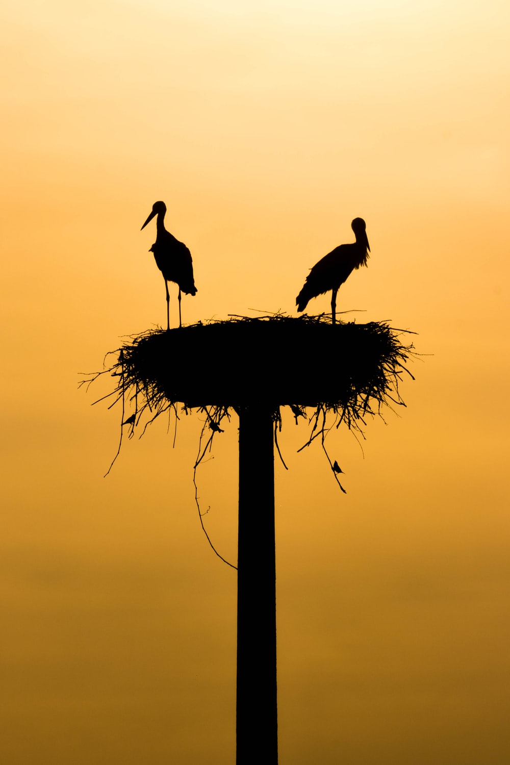 silhouette of birds during sunset