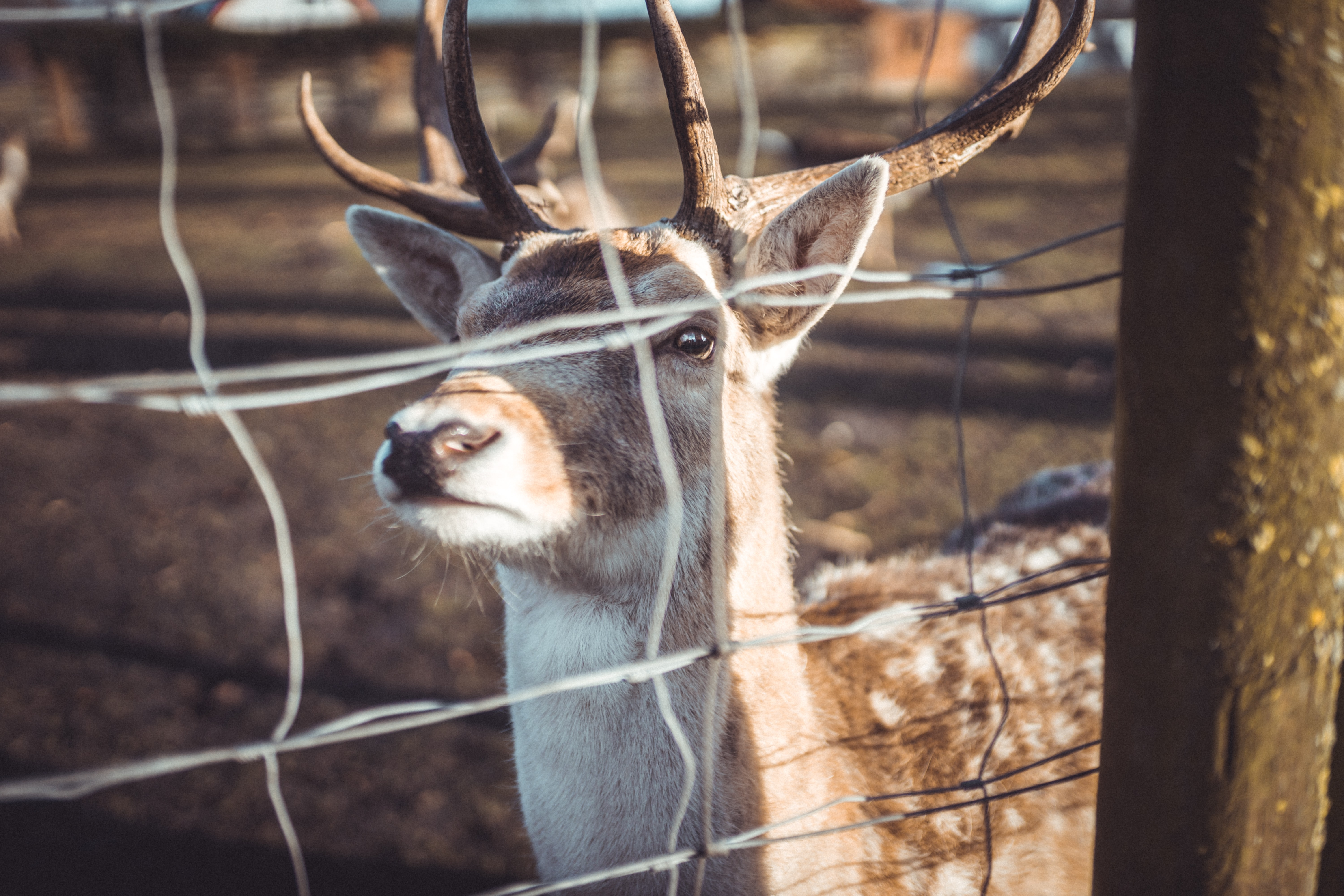 selective focus photography of brown deer behind fence