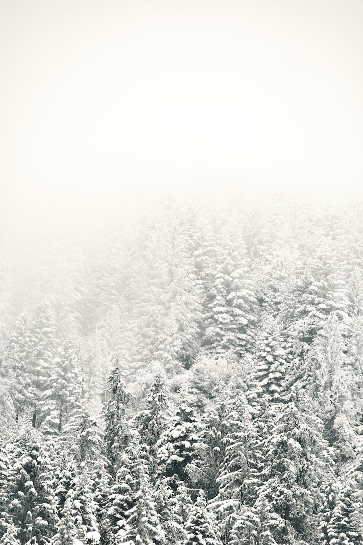 fog over tree