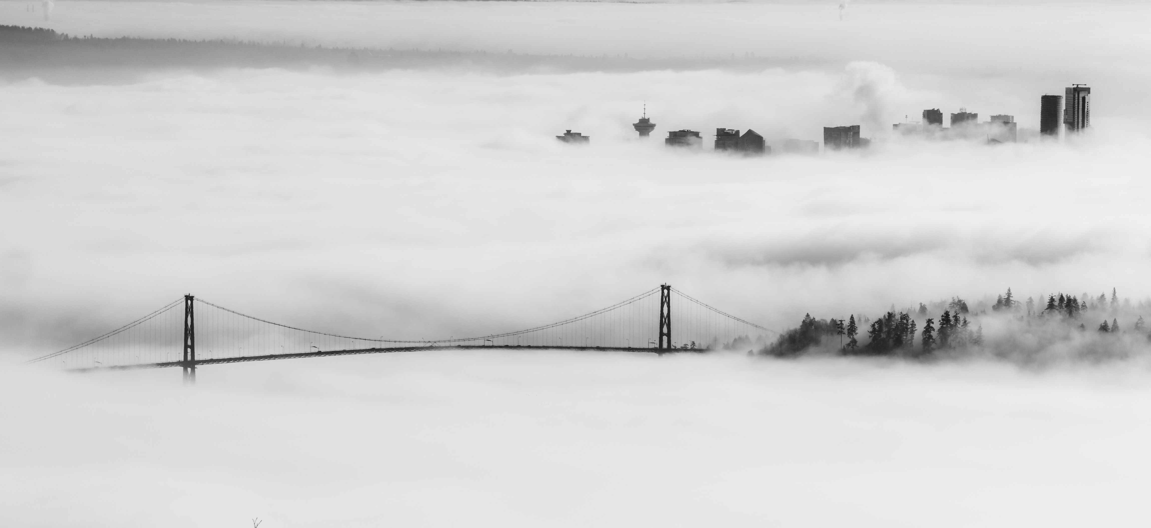landscape photo of bridge covered with fog