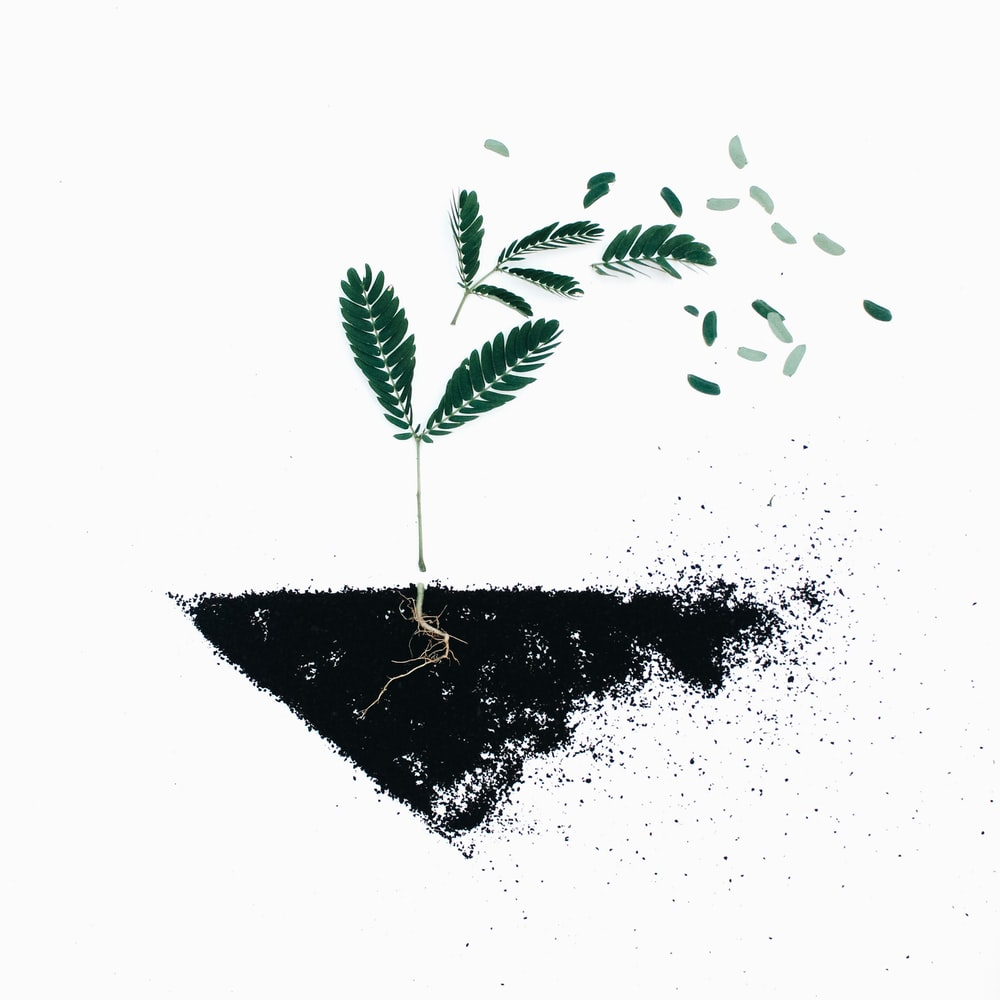 green leaf plants on black soil illustration