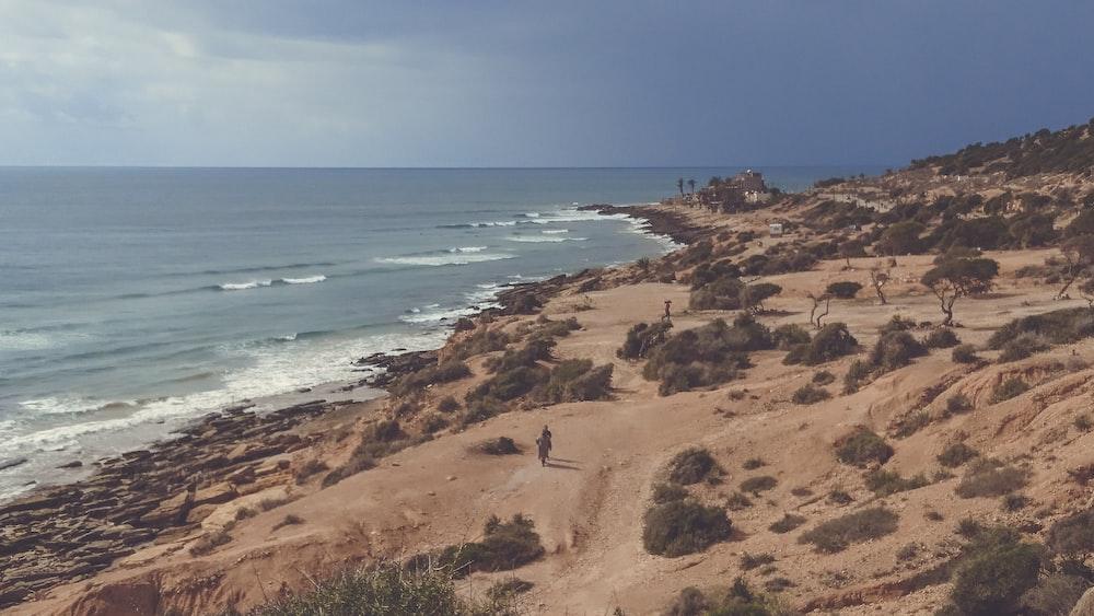bird's eye view photograph of people walking near shoreline