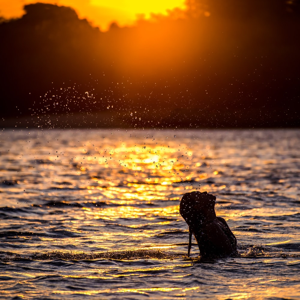 woman in body of water near trees during sunset