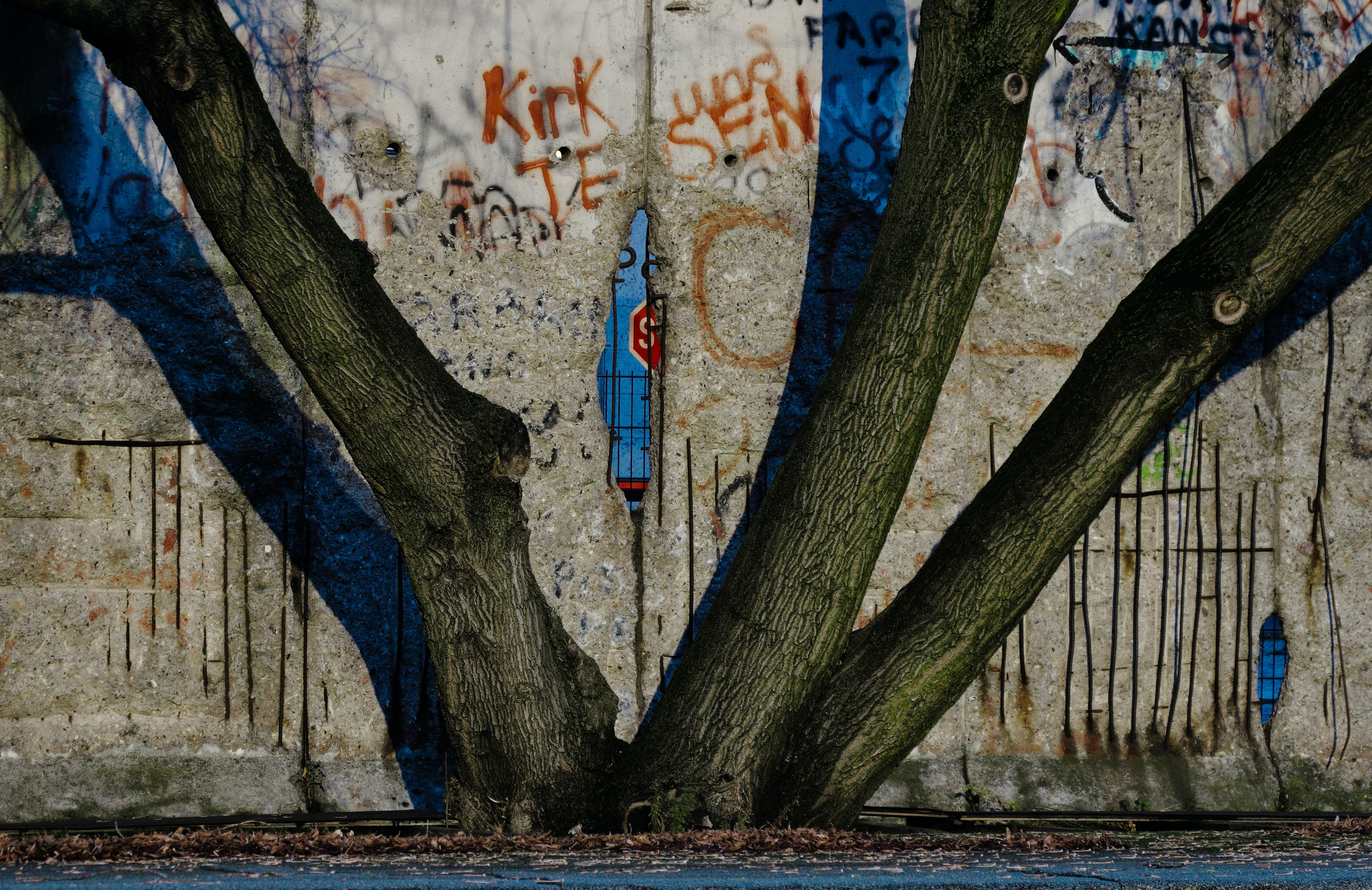 tree branch in front of wall painting