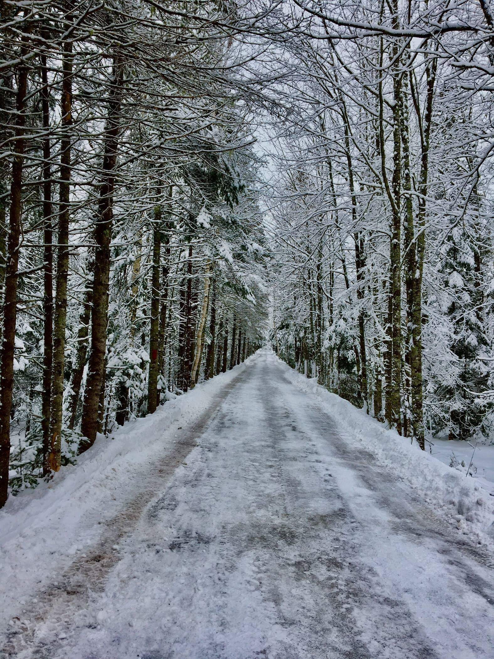 road surrounded with trees during winter