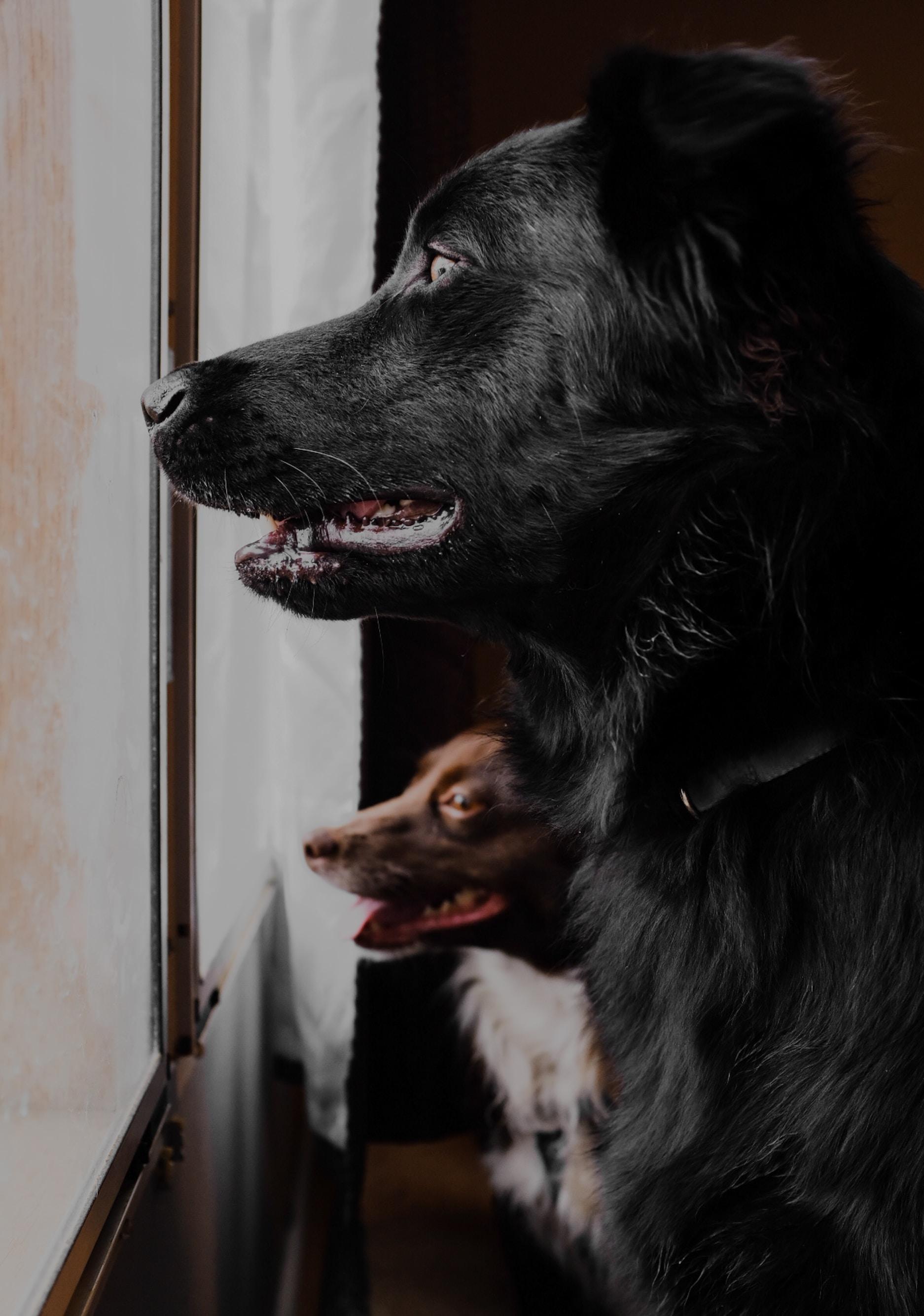 two dogs near glass window