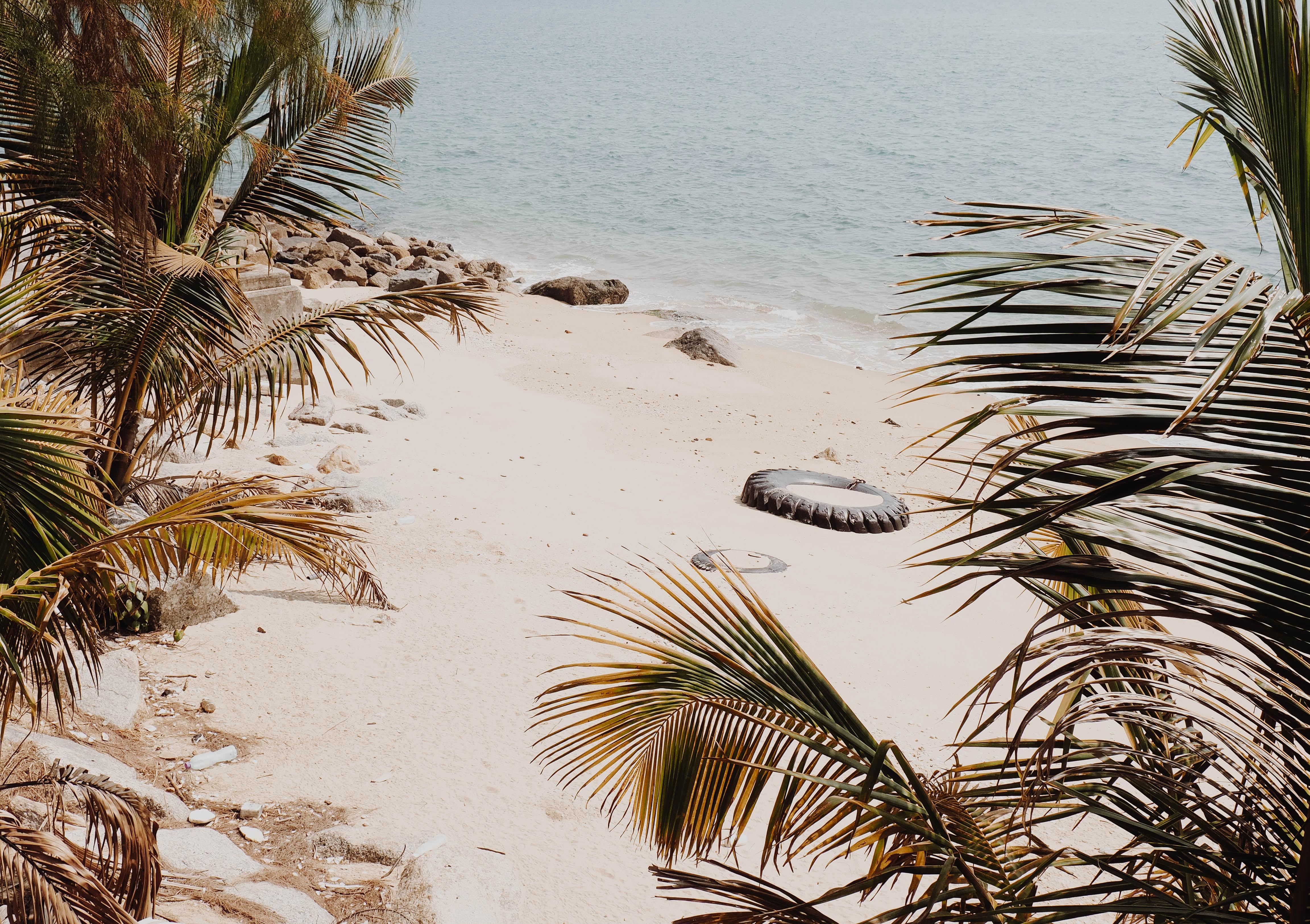 coconut palm trees near seashore at daytime