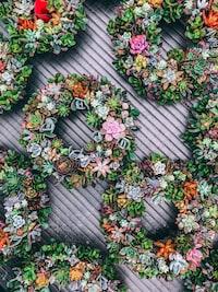 green round succulent plants