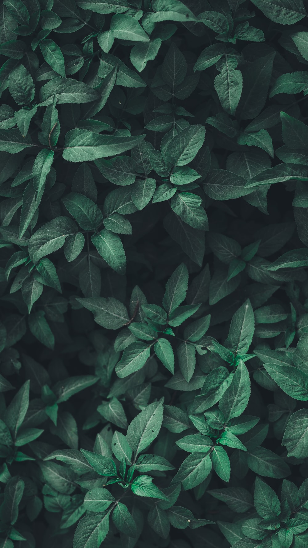 green leaf plants