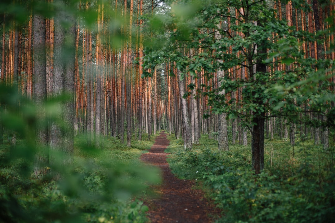 Path in the woods - Will God Protect from Harm?